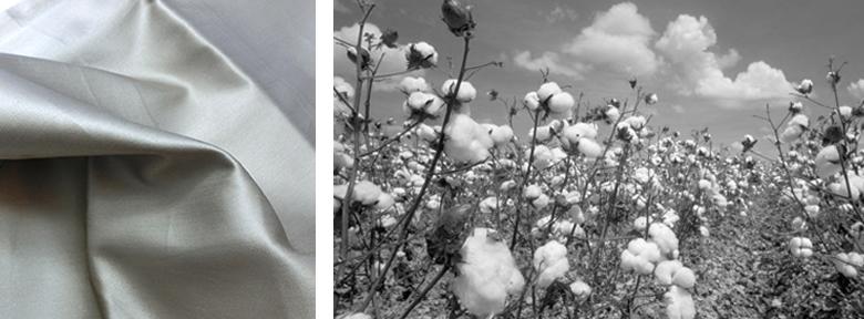 エジプト綿イメージ